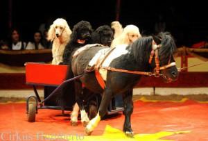 cirkus-humberto-horice-2