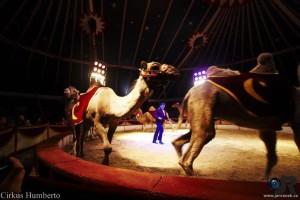 cirkus-humberto-horice-4