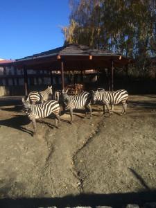 zoo-dvur-kralove