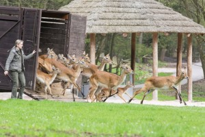 zoo-dvur-kralove-nad-labem-zahajeni-sezony-sobota-23-4-2016