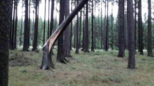 vitr-kacel-stromy-pardubicko