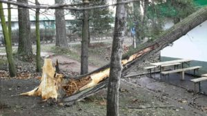 vitr-kacel-stromy-pardubicko-4
