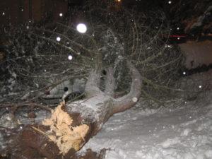 Trutnov - Slevárenský ulice - popadané stromy