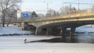 Odebírání uhynulé labutě - u FN u mostu - Hradec Králové