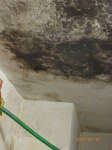 Nepovolená porážka a výroba masných výrobků v Rohoznici na Jičínsku