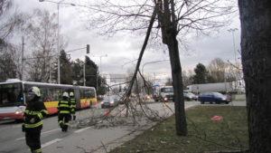 zasah-hasicu-popadane-stromy-24-2-2017-1