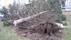 zasah-hasicu-popadane-stromy-24-2-2017-4
