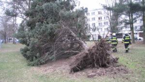 zasah-hasicu-popadane-stromy-24-2-2017-5
