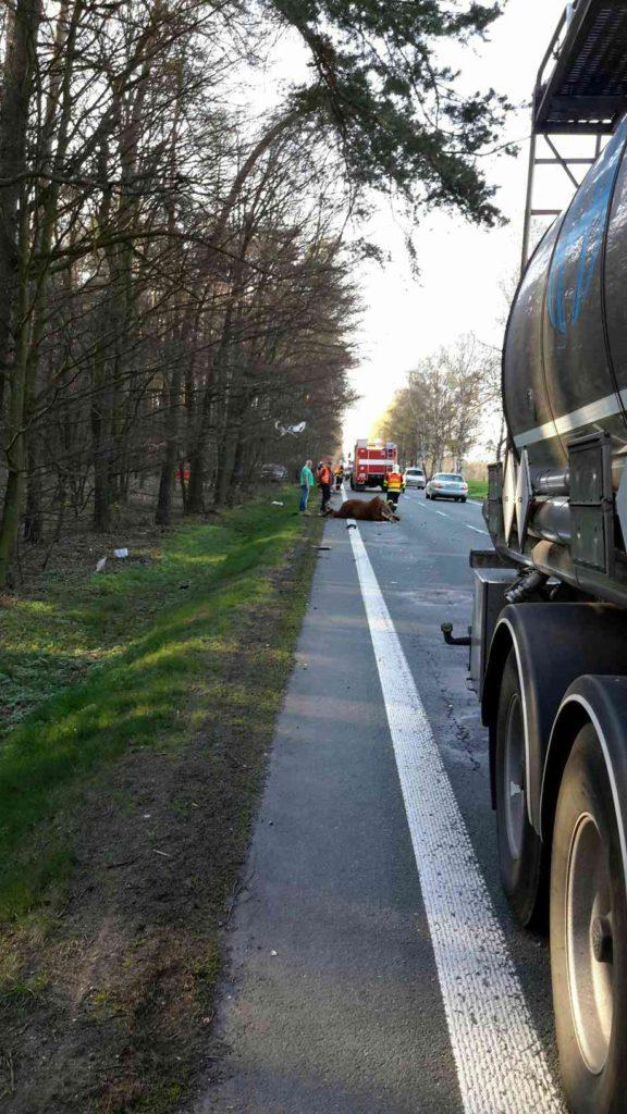 dopravni-nehoda-srazka-s-konem-2-4-2017-2