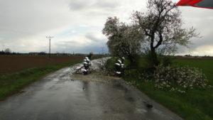 libcany-kaceni-stromu-23-4-2017-1