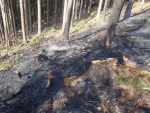 Požár lesa - Ždírnice