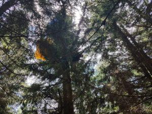hasici-horni-marsov-paraglidista-28-6-2017