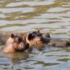 hroch-zoo-dknl-2